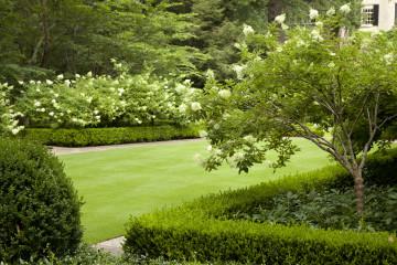 Посадка деревьев и декоративных цветов