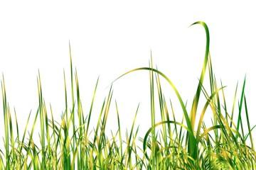 Проблемы газона