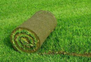 lawn_1