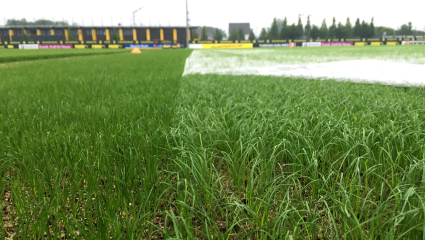 Evergreen-Turf-Cover-Radiant