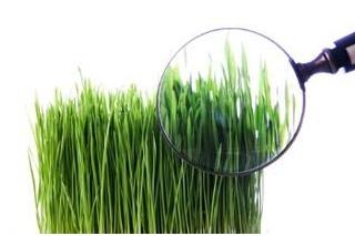 Анализ и диагностика газона